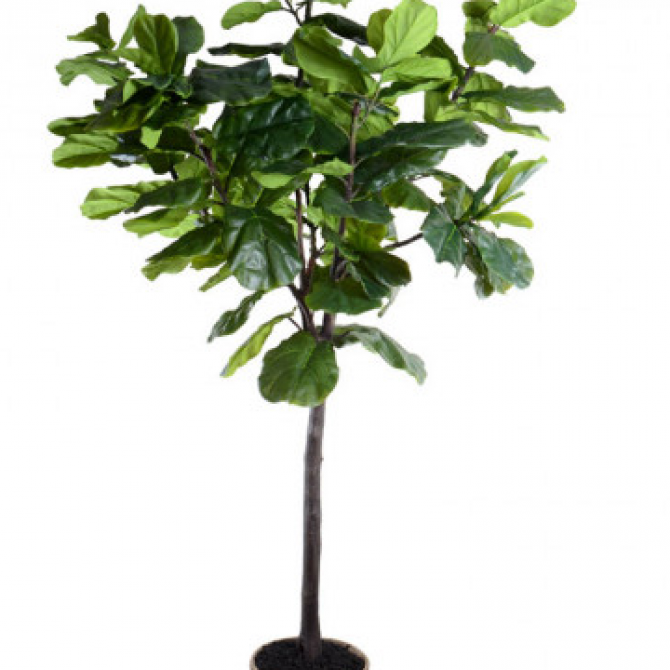 Impeccable FINDS: fake affordable fig trees, not so terrible?